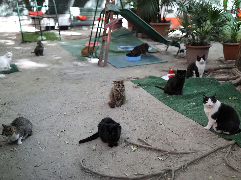Cat orphanage gallery