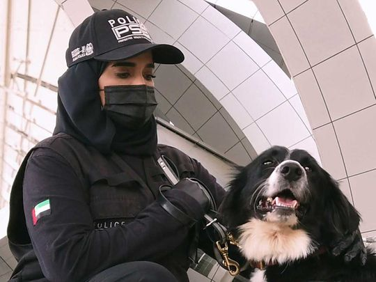 UAE Police sniffer dogs