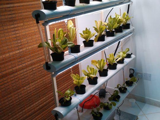 A healthy hydroponics ecosystem