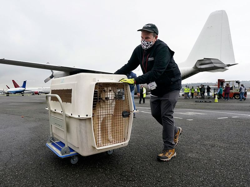 Pet flights