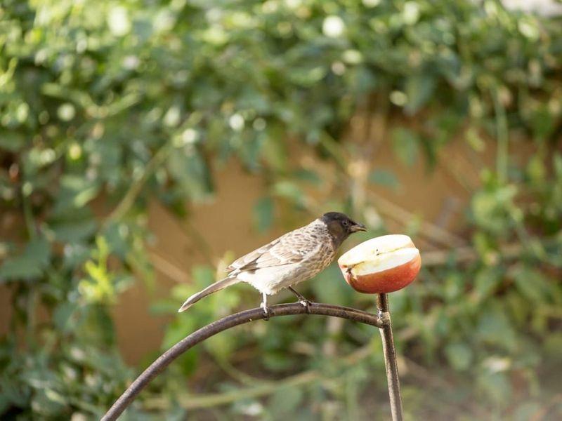 NAT  Hussain Nalwala BIRDS-1604120154855