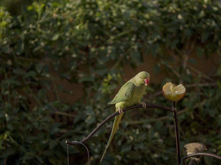 NAT  Hussain Nalwala BIRDS1-1604120157013