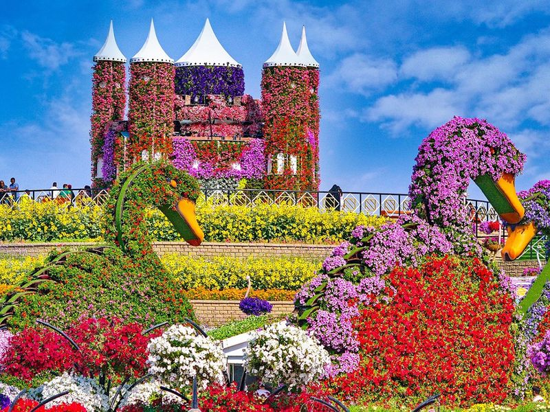 In Pictures: Dubai Miracle Garden welcomes back visitors with 150m flowers  | Lifestyle-photos – Gulf News