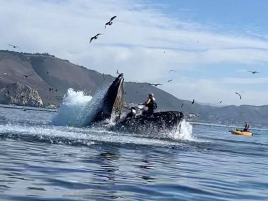 Whale almost swallows two kayakers