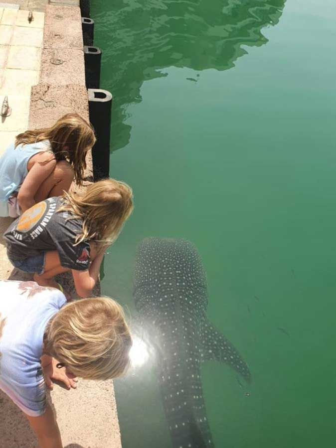 Young children look at the whale shark in Abu Dhabi