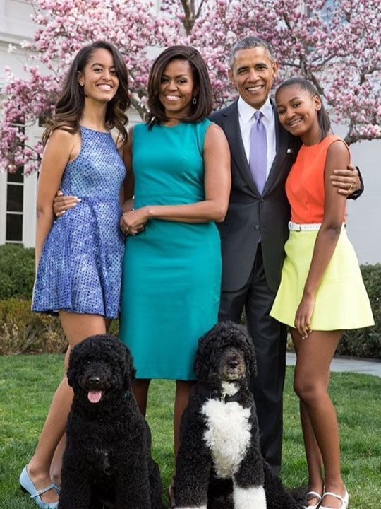 Portuguese Water Dogs Bo and Sunny came to live in the White House along with the Obamas.
