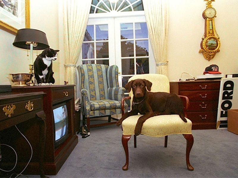 The Clintons' Pet Dog and Cat
