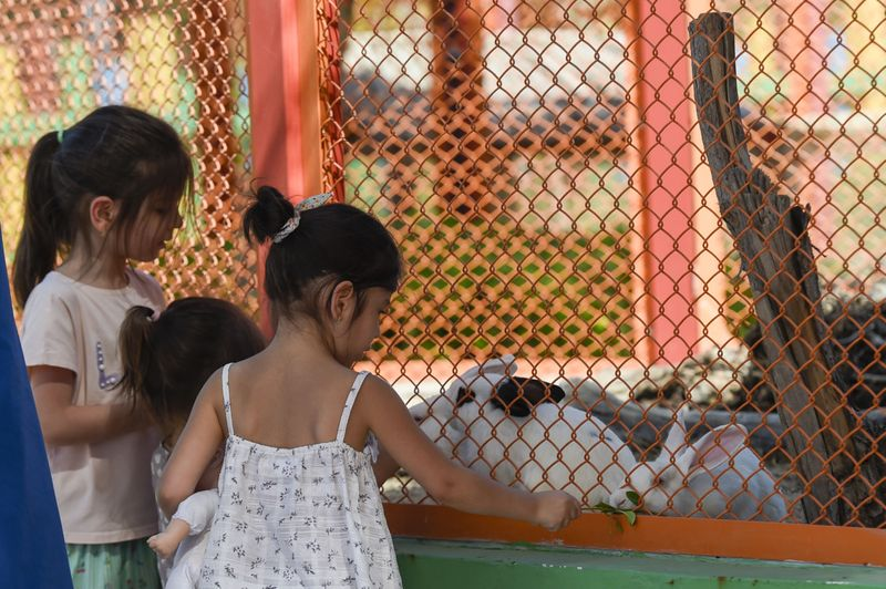 NAT 201016 DUBAI SAFARI ARAMZAN 45-1605243475945