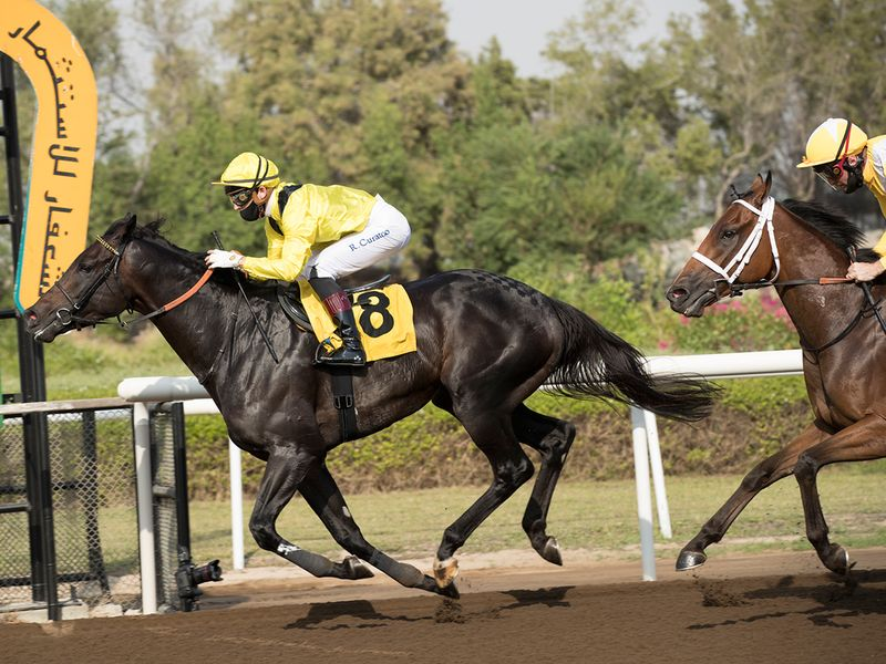 Shamikh brought up the first win of the new season for Jebel Ali Stables. the winner was ridden by Ryan Curatolo for trainer Nicholas Bachalard