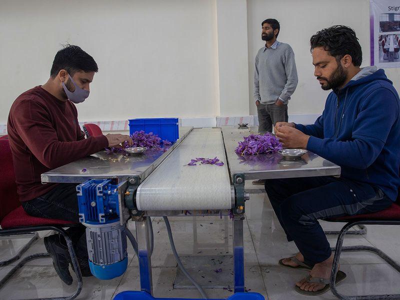 India_Kashmir_Saffron gallery