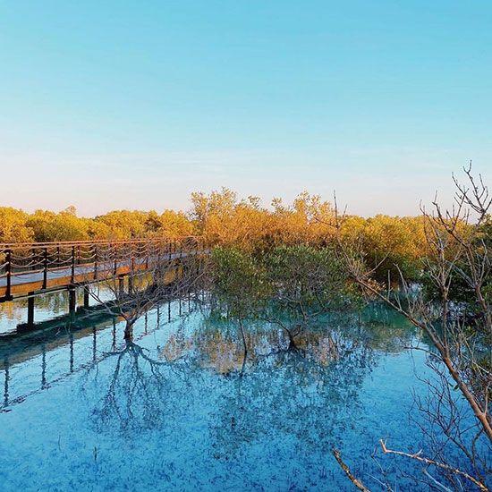 Abu Dhabi mangrove