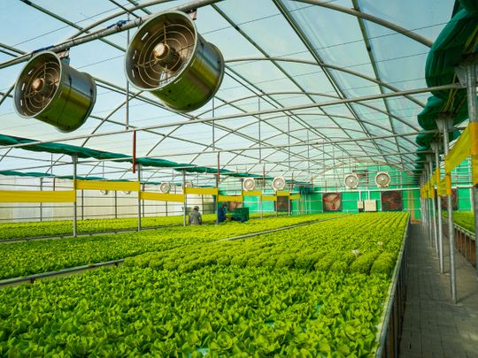 Creating a food-secure future
