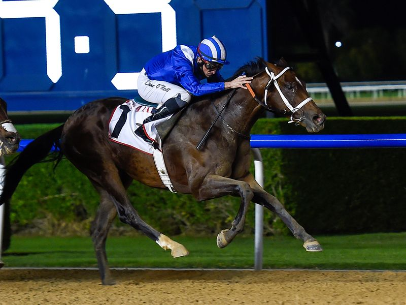 Mayaadeen, ridden by jockey Dane O'Neill, wins the Friday race at Meydan
