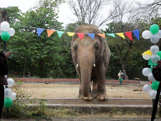 Kaavan, an elephant  Pakistan