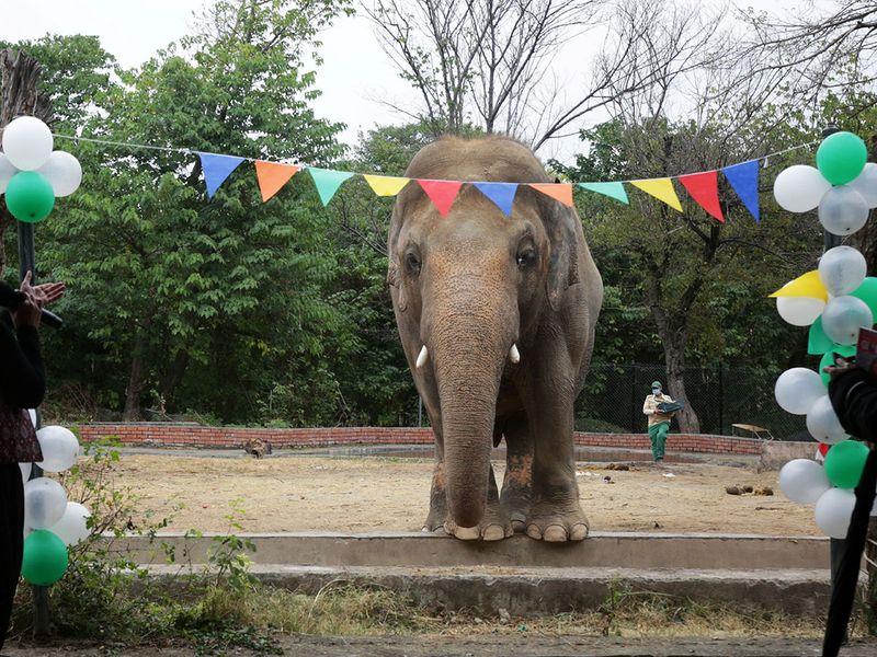 Elephant farewell gallery