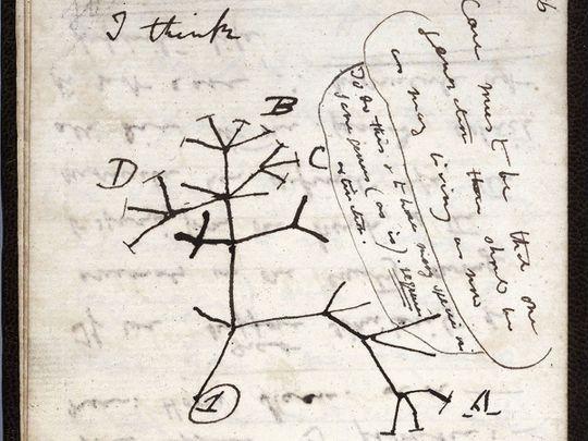 20201125 tree of life
