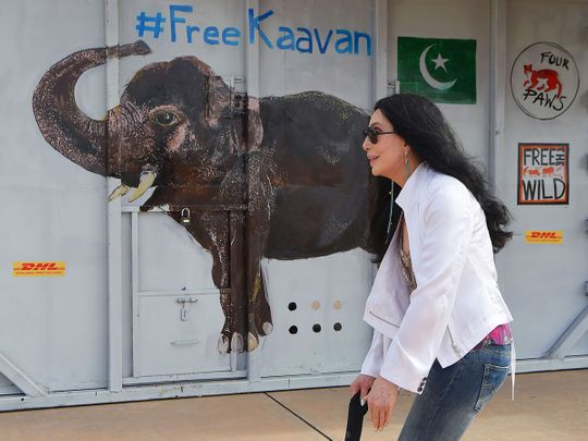 US pop singer Cher walks past the crate containing Kaavan