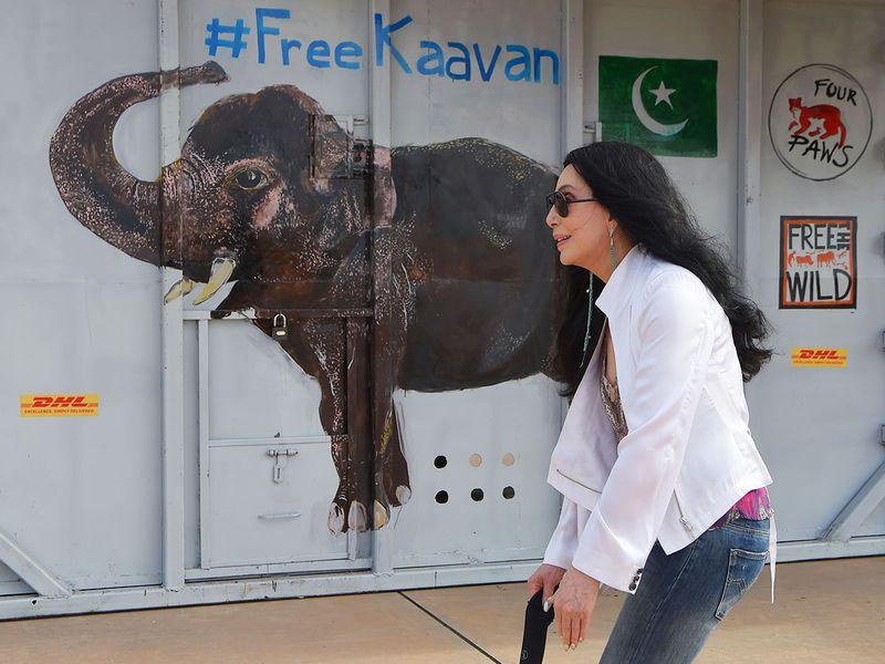 US pop singer Cher walks past the crate containing Kaavan
