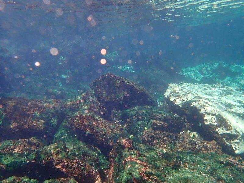 Pakistan corals bleaching