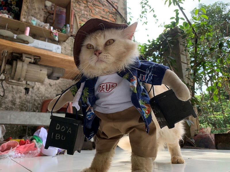 A cat wears a cosplay costume