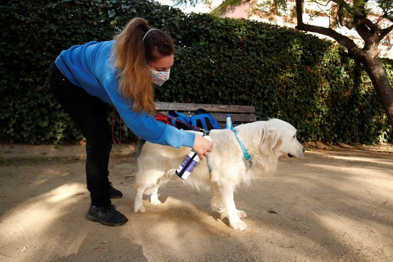 Copy of 2020-12-01T094627Z_857396499_RC29EK90CGBT_RTRMADP_3_HEALTH-CORONAVIRUS-SPAIN-THERAPY-DOGS-1606899594571
