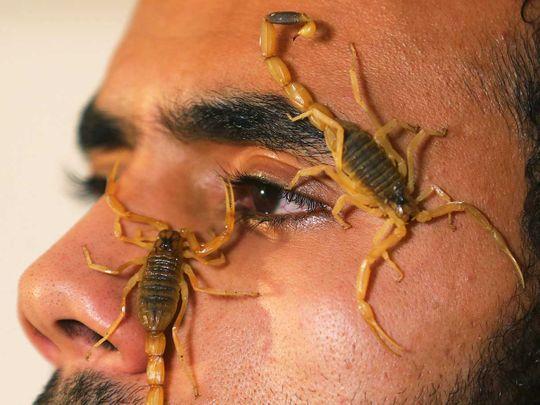 20201208 scorpions