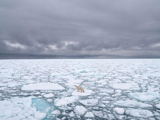 A polar bear in Svalbard, Norway, in 2018.
