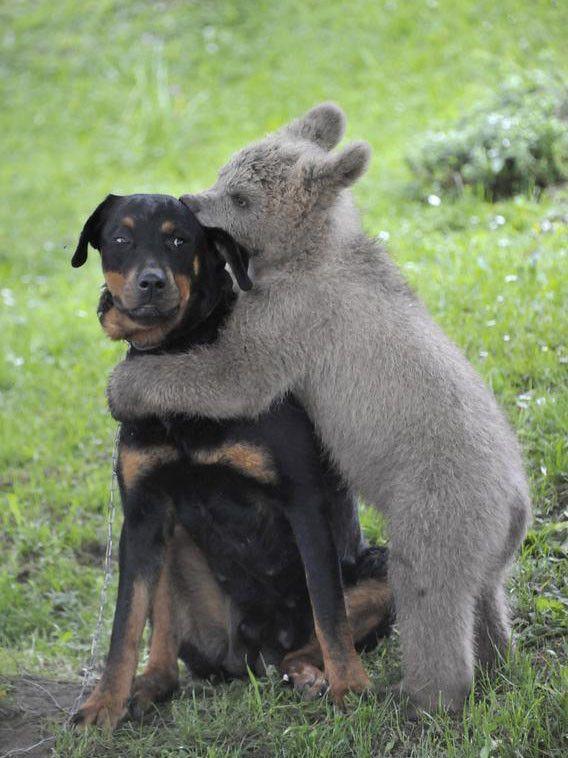 ANIMAL FRIEND144-1607581751700