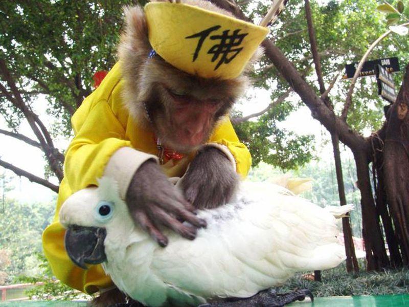 ANIMAL FRIEND25-1607581772441