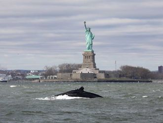 humpback whale New York