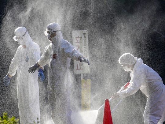 20201214_swine_flu_japan