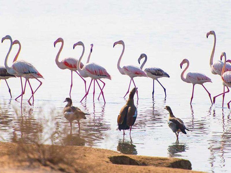 Umm Al Quwain Wetlands