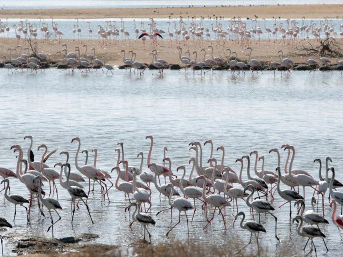Wathba Wetland Reserve