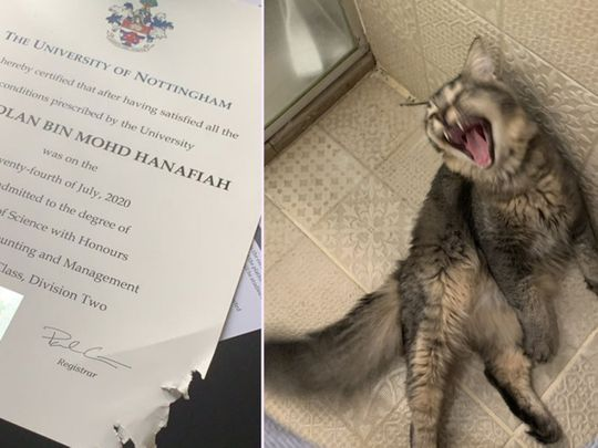 Cat eats Malaysian student's graduation certificate, photo goes viral on Twitter