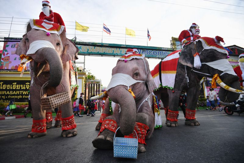 Copy of 2020-12-23T044140Z_659117000_RC2SSK9UHNE6_RTRMADP_3_HEALTH-CORONAVIRUS-THAILAND-CHRISTMAS-ELEPHANTS-1608719185575