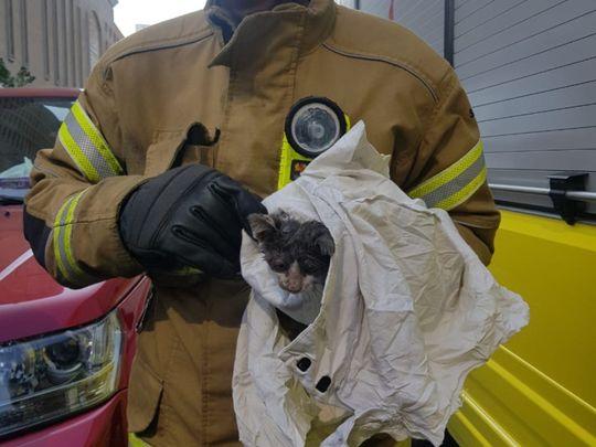 NAT 191231 Kitten Rescued-1577790774143