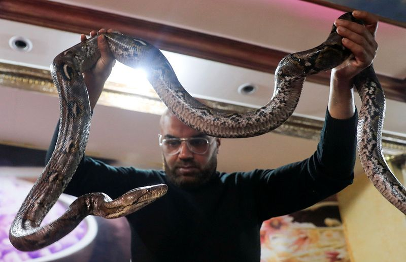 Egypt snake massage