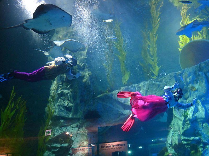 Divers in Hanbok gallery