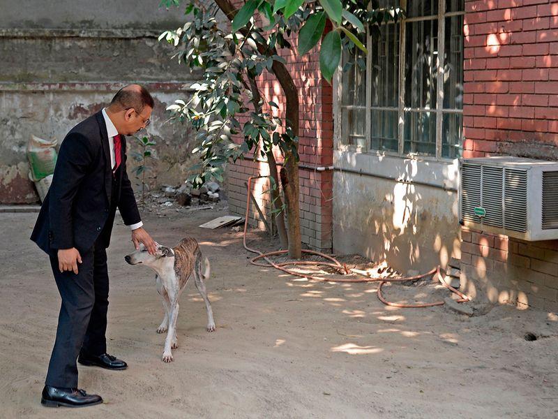 Sarail hound