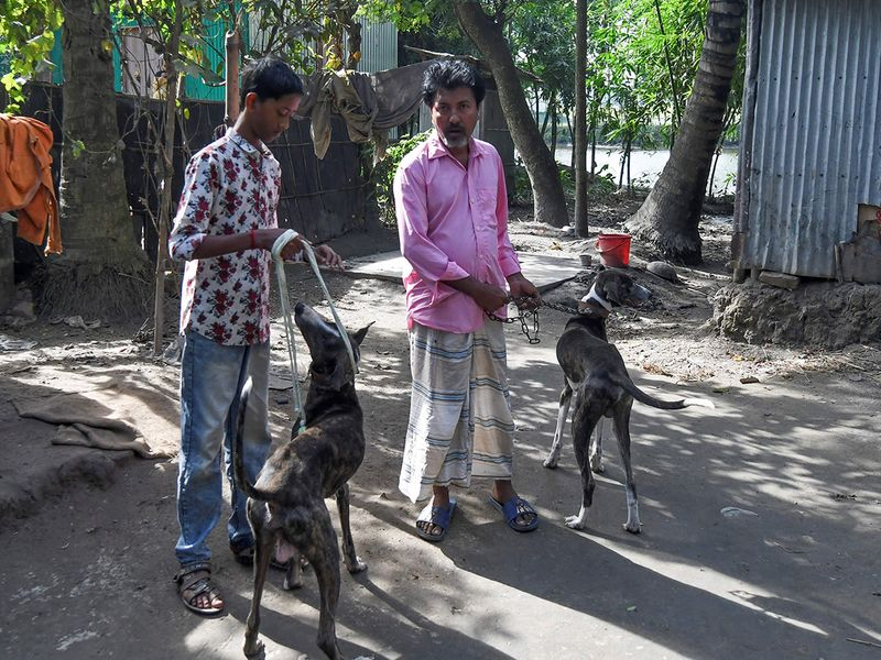 Sarail hounds
