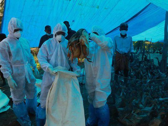 Kerala India bird flu