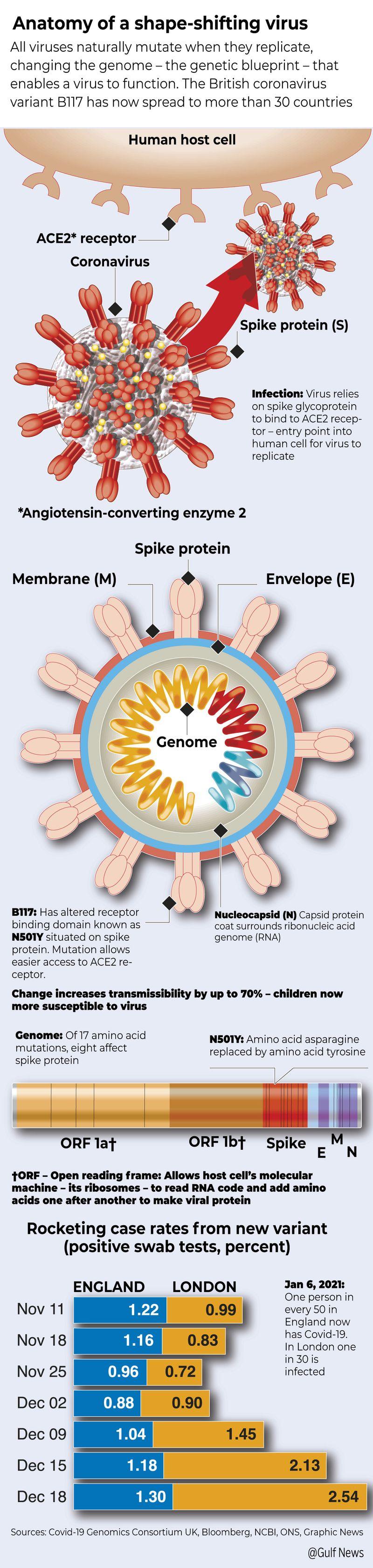 Anatomy of a shapeshifting virus