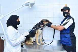 Sharjah Police K9-1610174600953