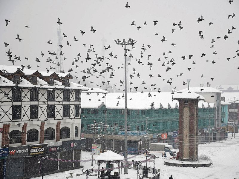 Pigeons fly over city center Lalchowk during fresh snowfall in Srinagar.