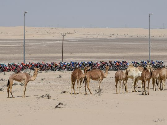 Cycling-UAE Tour