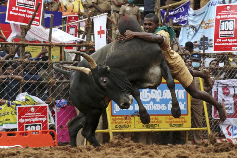 Copy of India_Bull_Taming_63716.jpg-8129e-1610779604006