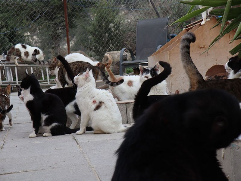 Cyprus cats gallery