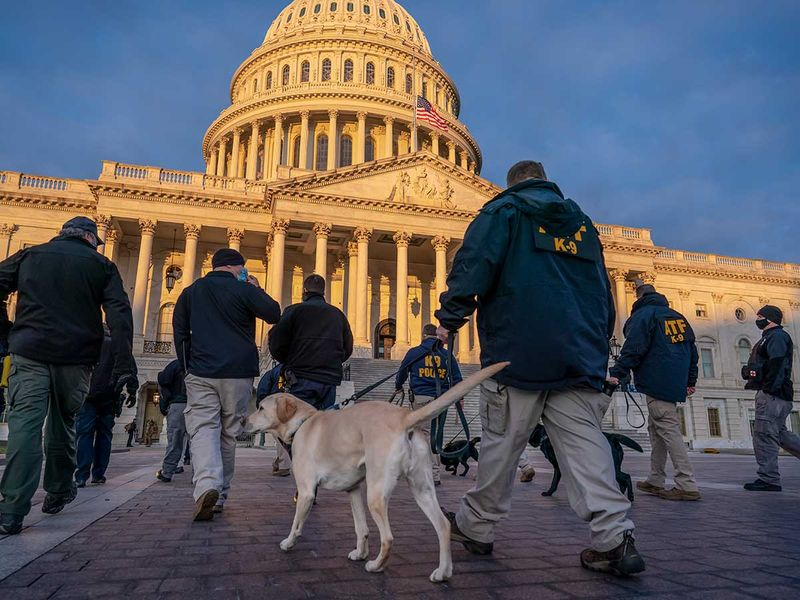 K-9 units security Capitol inauguration