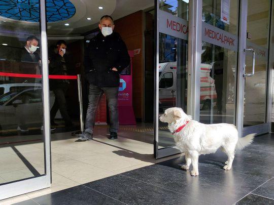 Turkey_Dog_Sick_Owner_80237
