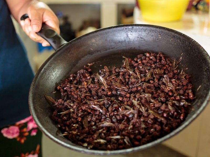 Flying ants - Chicatana